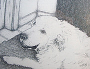 Puppy Drawings - Prince - Age 12 - Day before he died by Conor OBrien