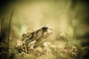 Toad Framed Prints - Prince Framed Print by Shane Holsclaw