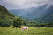 Grazing Horse Posters - Pristine Pastures  Poster by Hawaii  Fine Art Photography