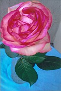 Robert Bray Metal Prints - Pristine Rose with Leaves Metal Print by Robert Bray