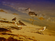 Deborah Benoit Posters - Private Beach For The Birds Poster by Deborah Benoit