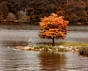Autumn Landscape Art - Private Island by Jai Johnson