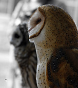 Owl Digital Art Metal Prints - Profile in Owl Metal Print by Steven  Digman