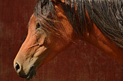Bay Horse Originals - Profile of a horse. by Tommy Hammarsten