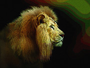 Profile Of The Lion King Print by Robert Foster