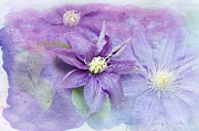 Stamen Digital Art Framed Prints - Profusion of Purple Framed Print by Betty LaRue