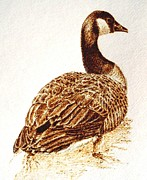 Drawing Pyrography Originals - Promenade- Canada Goose by Cara Jordan