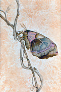 Promethea Framed Prints - Promethea Moth Framed Print by Katherine Miller