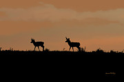 Ernie Echols Framed Prints - Pronghorn Sunrise Framed Print by Ernie Echols