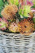 Wicker Basket Prints - Protea Basket Print by Neil Overy