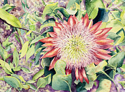 Martha Shilliday - Protea