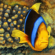 Sandi Howell - Protective Clown Fish
