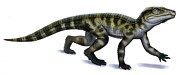 Dinosaur Illustration Posters - Protosuchus, An Early Jurassic Poster by H. Kyoht Luterman