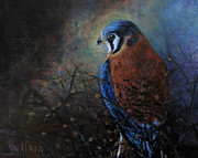 JoAnne Sullam - Protrait of a Kestrel
