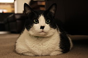 Canvas  Black And White Cat Photos - Protrait of Keetz Keetz by Jennifer Doll