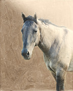Gray Horse Photos - Proud by Betty LaRue