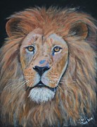 Pride Painting Framed Prints - Proud Lion Framed Print by Shirl Theis