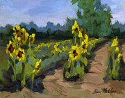 Diane McClary - Provence Sunflower Field