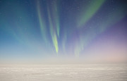 Prudhoe Bay Aurora Borealis Print by Sam Amato
