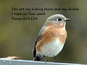 Verses Photos - Psalm 119 114 by Barbara Dalton