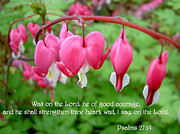 Bible Posters - Psalms 27 14 Bleeding Hearts Poster by Sara  Raber