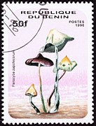Postage Stamp Prints - Psilocybin mushroom Psilocybe zapotecorum Print by Jim Pruitt