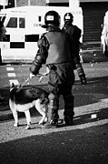 County Police Posters - PSNI dog handler in riot gear with dog on crumlin road at ardoyne shops belfast 12th July Poster by Joe Fox