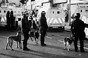 County Police Posters - PSNI dog handlers in riot gear and dogs on crumlin road at ardoyne shops belfast 12th July Poster by Joe Fox