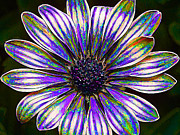 Digitally Manipulated Framed Prints - Psychedelic Daisy Framed Print by ABeautifulSky  Photography
