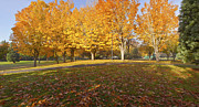 Oregon State Art - Public park Autumn panorama Gresham Oregon. by Gino Rigucci