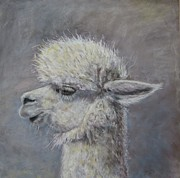 Alpacas Posters - Pucker Up Baby Poster by Elizabeth  Ellis