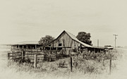 Farm Life Prints - Puckerbrush Rd Barn  Print by Wilma  Birdwell