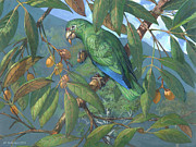 ACE Coinage painting by Michael Rothman - Puerto Rican Amazon