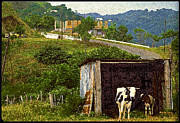 Puerto Rico Digital Art Prints - Puerto Rico Countryside Print by Ed Hoppe