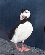 Sea Birds Paintings - Puffin by Andy PYRAH