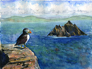 Puffin Paintings - Puffin at Skellig Island Ireland by John D Benson