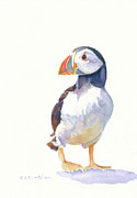 Puffin Paintings - Puffin by Cynthia Roudebush