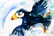 Puffin Paintings - Puffin Flight by Dawn Derman