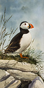 Artist Canvas Painting Originals - Puffin by James Williamson