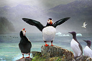 Razorbill Digital Art Posters - Puffin Pano Poster by R christopher Vest