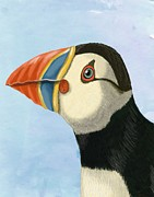 Portrait Posters Prints - Puffin portrait Print by Loopylolly