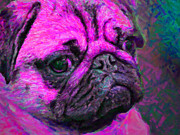 Puppies Digital Art Metal Prints - Pug 20130126v3 Metal Print by Wingsdomain Art and Photography