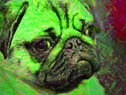 Puppies Digital Art Metal Prints - Pug 20130126v4 Metal Print by Wingsdomain Art and Photography