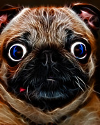 Dogs Digital Art Metal Prints - Pug Dog - Electric Metal Print by Wingsdomain Art and Photography