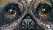 Donna Chaasadah Framed Prints - Pug Framed Print by Donna Chaasadah