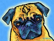 Isolated On Blue Background Framed Prints - Pug Framed Print by Marlene Watson