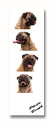 Booth Prints - Pug Photo Booth Print by Edward Fielding