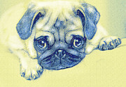 Puppies Digital Art - Pug Puppy Pastel Sketch by Jane Schnetlage