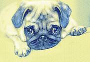 Pug Puppy Pastel Sketch Print by Jane Schnetlage