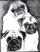 Puppies Drawings Framed Prints - Pugs Framed Print by James Oliver